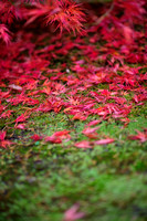 crimson leaves on moss bed